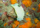 Cerro Gordo dive site, Costa del Sol, Spain